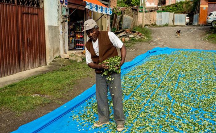 与村民一样劳作务农的国王皮内多。