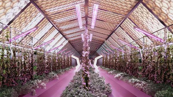 """壮观的""""绿色圆顶""""建筑将充当居民的公园,或者是尝试种植实验性植被的场所。(构想图)"""