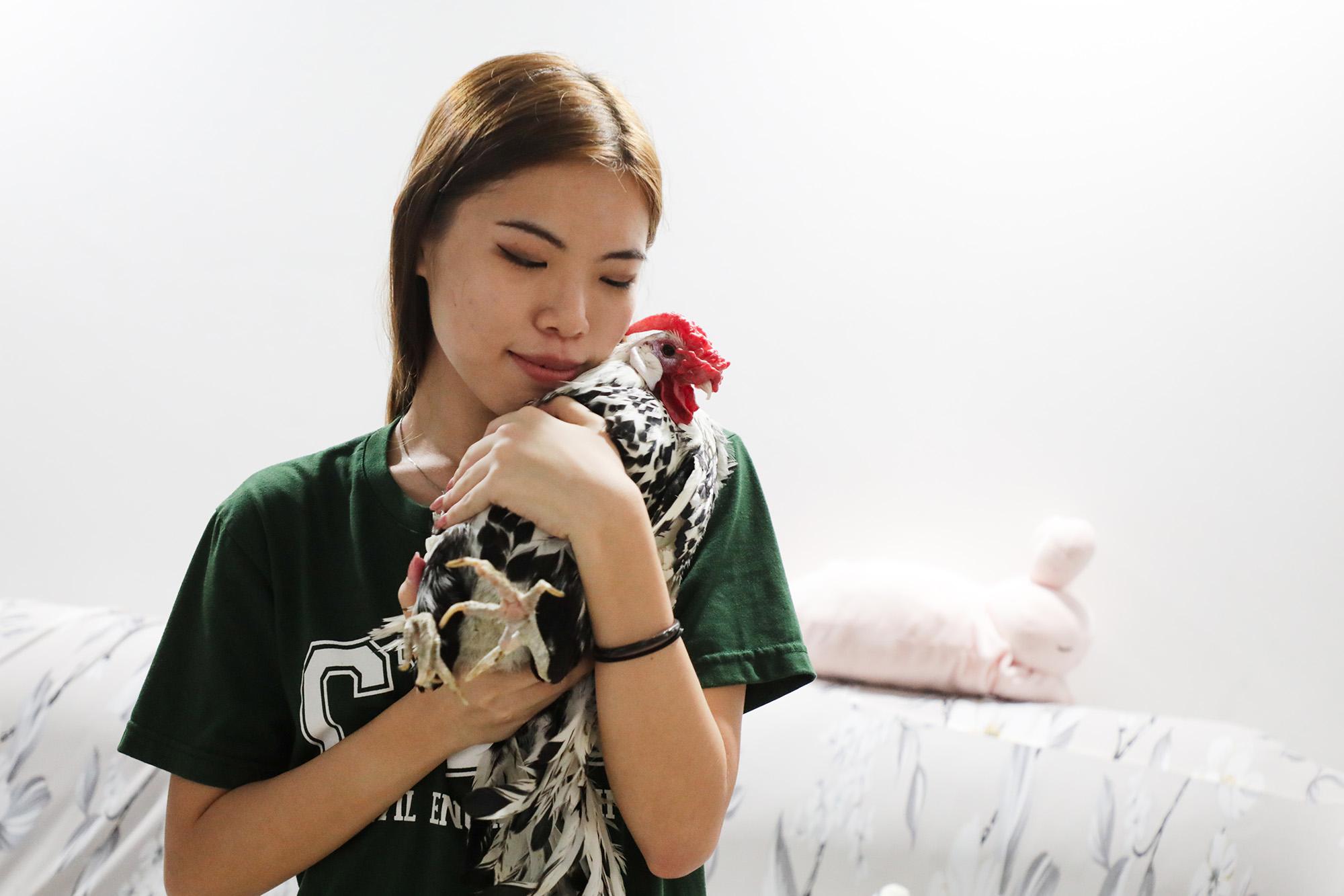"""宠物鸡""""恐龙""""乖顺地被覃善雯抱在怀里。"""
