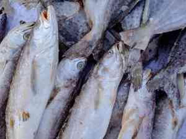 冷冻带鱼包装验出病毒 大马一企业产品暂停进口中国1周